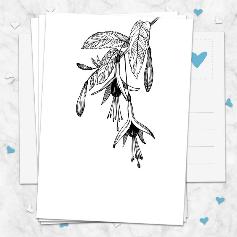 Postkarte Fuchsie